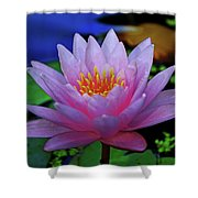 Pink Water Lily 007 Shower Curtain