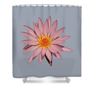 Pink Water Lily Transparent Shower Curtain