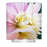 Pink White Dahlia Flower Soft Pastels Art Print Canvas Baslee Troutman Shower Curtain