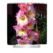 Pink-white-yellow Gladiolus Shower Curtain