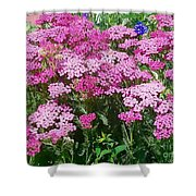 Pink Yarrows Shower Curtain