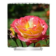 Pink Yellow Roses 3 Summer Rose Garden Giclee Art Prints Baslee Troutman Shower Curtain