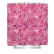 Pink Zebra Print Shower Curtain