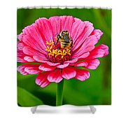 Pink Zinnia Bee Shower Curtain
