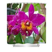 Pinkishyellow Orchid Shower Curtain