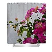 Pinks Portrait Shower Curtain