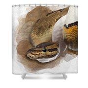 Pinstripe Pied Royal Python 01 Shower Curtain