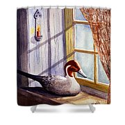 Pintail Decoy Shower Curtain