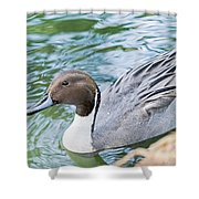 Pintail Portrait Shower Curtain
