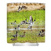 Pintail Take-off Shower Curtain