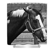 Pinto Pal Shower Curtain