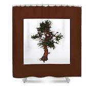 Pinus Aristata Tree Shower Curtain