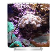 Pipe Fish And Sea Anemone  Shower Curtain