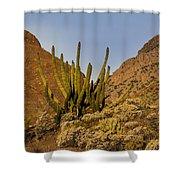 Pipe Organ Cactus At Sunrise Shower Curtain