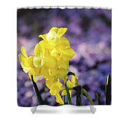Pipit  Shower Curtain