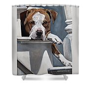 Pitbull Stare Shower Curtain