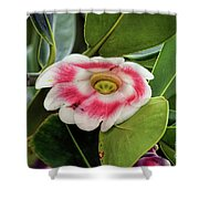 Pitch Apple Blossom Shower Curtain