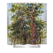 Pitch Pines, Cape Cod Shower Curtain