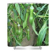 Pitcher Plant Madness Shower Curtain