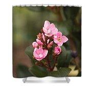 Pittosporum Pink 2 Shower Curtain