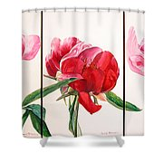 Pivoines Shower Curtain