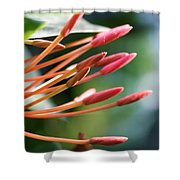 Plant 2 Shower Curtain