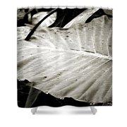 Plant 8650 Shower Curtain