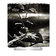 Plant 8657 Shower Curtain