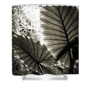 Plant 8661 Shower Curtain