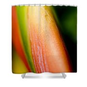 Plant Abstract IIi Shower Curtain