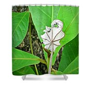 Plant Artwork Shower Curtain