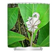 Plant Artwork Shower Curtain
