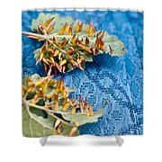 Plant Galls Shower Curtain