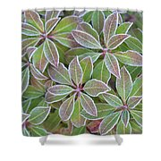 Plant Pattern Shower Curtain