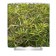 Plant Power 9 Shower Curtain by Eikoni Images