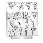 Plant Sexual Systems, Carl Linnaeus Shower Curtain