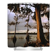 Plantation Gardens, Cypress Trees Shower Curtain