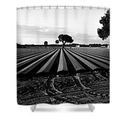 Planted Fields Shower Curtain