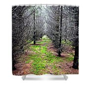 Planted Spruce Forest Shower Curtain