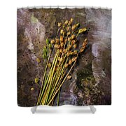 Plants And Seeds Shower Curtain