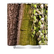 Plants And Trees Hawaii 522 Shower Curtain