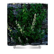 Plants Grow Anywhere Shower Curtain