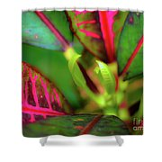 Plants In Hawaii Shower Curtain