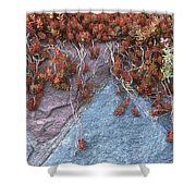 Plants On The Rock Two  Shower Curtain