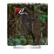 Plastic Wrapped Pileated Woodpecker Shower Curtain