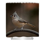 Plastic Wrapped Titmouse Shower Curtain