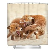 Playfighting Red Fox Kits Shower Curtain