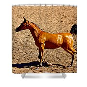 Playful Canter Shower Curtain