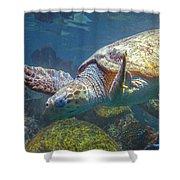 Playful Green Sea Turtle Shower Curtain