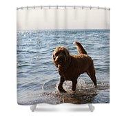 Playful Puppy Shower Curtain